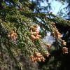 春は肝臓の毒だしの季節 花粉症もその一つ