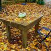 秋のめんげんが始まった!体は本当に正直