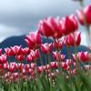 春・春・春
