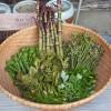 春は山菜で肝臓のデトックスを 食べやすい山菜料理あれこれ