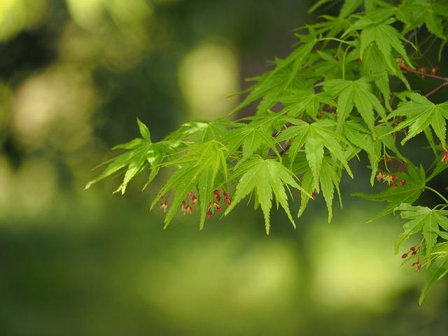 fresh-green-728505_640